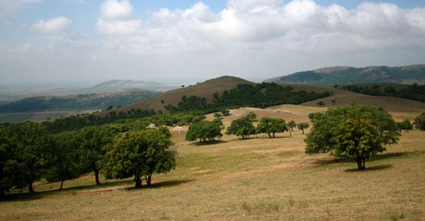 Imagine din traseul Crapcea (foto: www.parcmacin.ro)